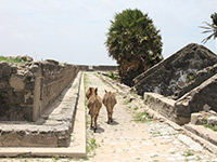 Sri Lanka - Fort in Mannar